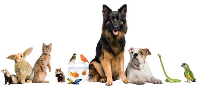 Voor het gemak van u en uw huisdier, waar het u past